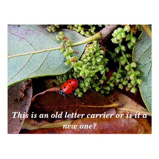 LadyBug, This is an old letter carrier or is it... Postcards