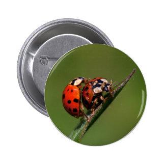 Ladybugs In Love 6 Cm Round Badge