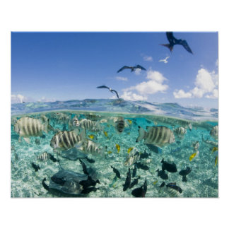 Lagoon safari trip featuring Stingrays Poster