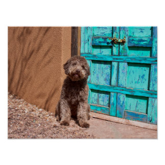 Lagotto Romagnolo Waiting By A Blue Door Poster