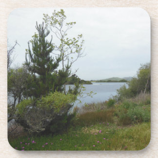 Laguna Lake, San Luis Obispo, after Rain Coaster