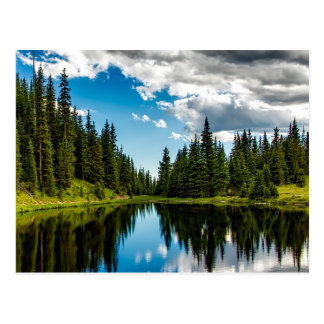 Lake and Evergreen Tree Lined Postcard