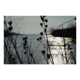 Lake in background of weeds close focus poster
