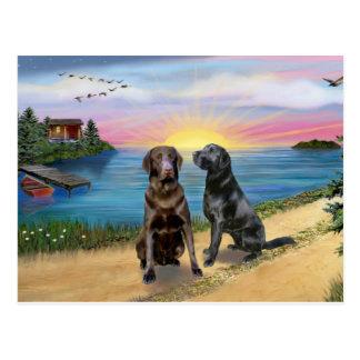 Lake Road - Two Labrador Retrievers (Choc-Blk) Postcard