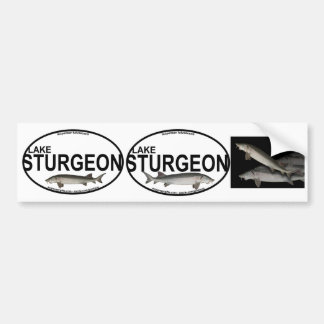 Lake Sturgeon Bumper Stickers