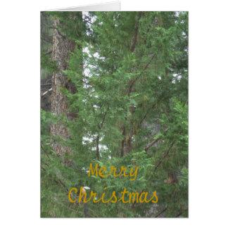 Lake Tahoe Christmas Collection Card