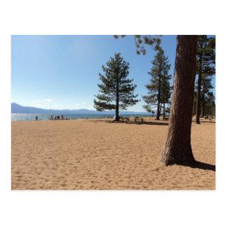 Lake Tahoe Evergreens Postcard