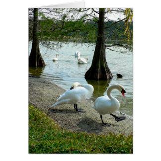 Lakeland Swans Card