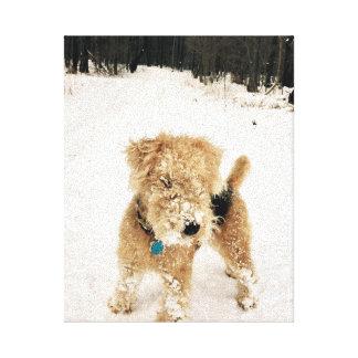 Lakeland Terrier Canvas Print