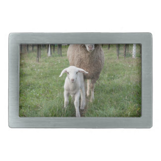 Lamb and sheep belt buckle