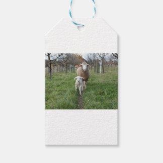 Lamb and sheep gift tags