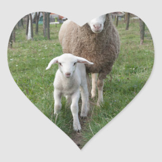 Lamb and sheep heart sticker