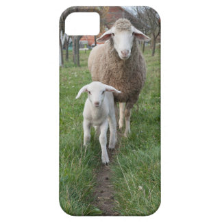 Lamb and sheep iPhone 5 cover