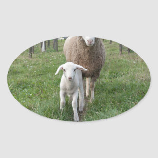 Lamb and sheep oval sticker