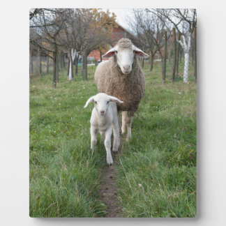 Lamb and sheep plaques
