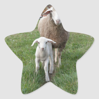 Lamb and sheep star sticker