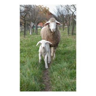 Lamb and sheep stationery