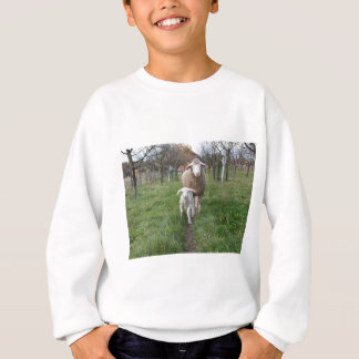 Lamb and sheep sweatshirt