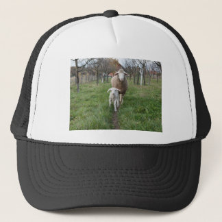 Lamb and sheep trucker hat