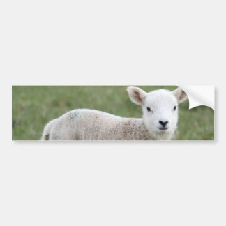 LAMB BUMPER STICKER