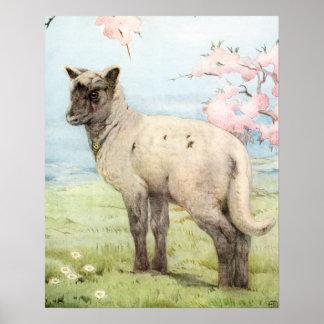 Lamb by E. J. Detmold Poster