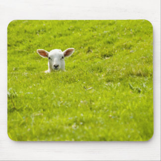 lamb in a dip mouse pad