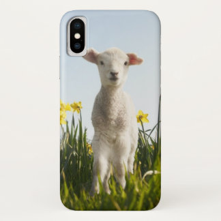 Lamb in a Field of Flowers iPhone X Case