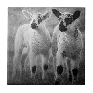 Lamb in spring small square tile