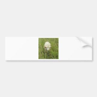 Lamb in the Meadow Bumper Sticker