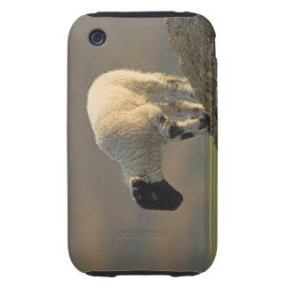 Lamb on a Hilltop iPhone 3/3GS Case-Mate Tough Tough iPhone 3 Case