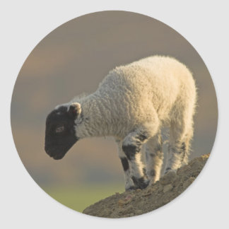 Lamb on a Hilltop Stickers