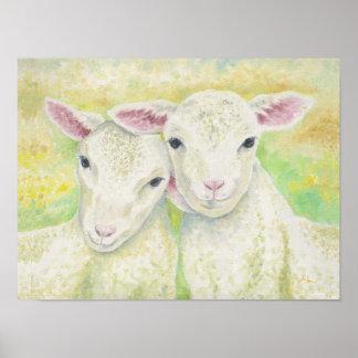 Lamb Pair Poster