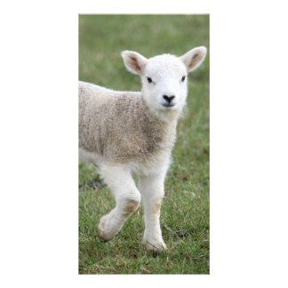 Lamb Personalized Photo Card