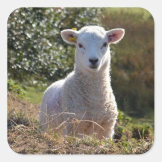 Lamb Photo Stickers