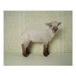Lamb Standing Indoors, and Floral Wallpaper Poster