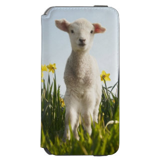 Lamb walking in field of flowers incipio watson™ iPhone 6 wallet case