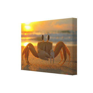 Land Crab at Sunset Canvas Wrap Canvas Print