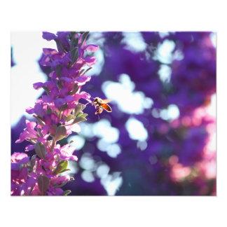 Landing Bee Photo Print