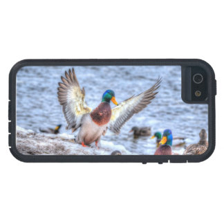 Landing Mallard Duck Drake 5 Wildlife Photo Cover For iPhone 5