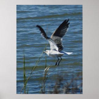 Landing Sea Gull Poster