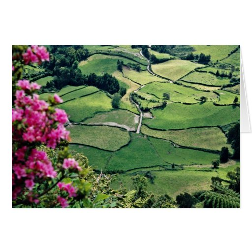 Landscape at Sao Miguel, Acores Islands  flowers Greeting Cards