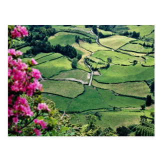 Landscape at Sao Miguel, Acores Islands  flowers Postcard