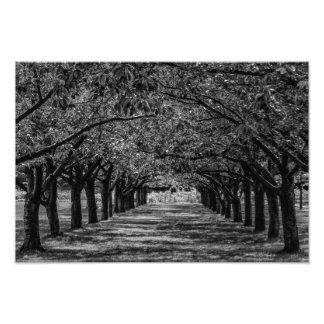 Landscape Nature Trees Photo Print