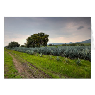 Landscape Of Blue Agave Card