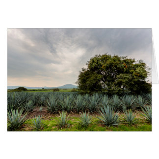 Landscape With Blue Agave Card