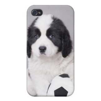 Landseer puppy iPhone 4 covers