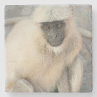 Langur Monkey, Amber Fort, Jaipur, Rajasthan Stone Beverage Coaster