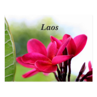 Laos Plumeria Postcard