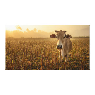 Laos, Vang Vieng. Cow at sunrise Gallery Wrapped Canvas
