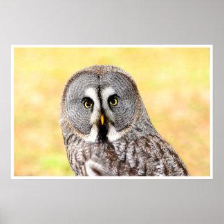 Lapland owl poster